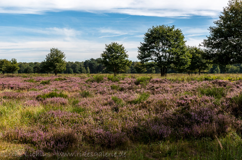 Wahner Heide - September 2012