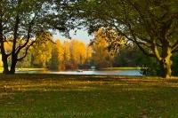 Herbst in der Rheinaue