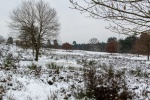 Winter in der Heide